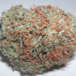 Bubba Kush source - Wikipedia